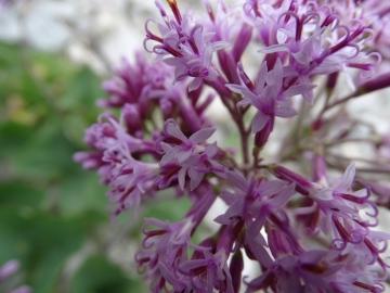 2015-07-15 fiori Arera 029