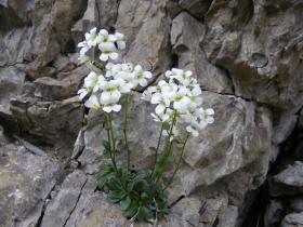 2009-06-07 Monte Caplone 011