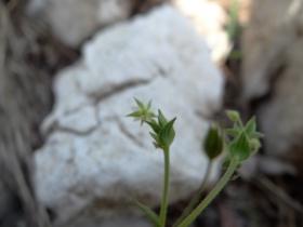 2018-04-28 fiori s.Marco 118