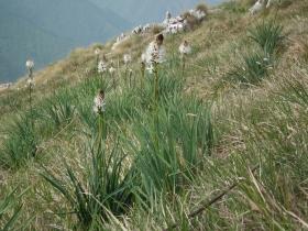 2011-05-18 zingla 279