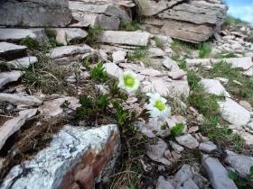 2017-06-02 sulle tre cime del Bondone (115)