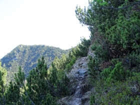 2017-05-21 cima Levante dalle crestine (122)