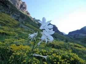 2018-07-01 cima Valpianella Benigni 009a