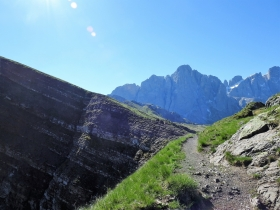 2017-06-11 cima Venegiota e Primula tyrolensis (123)