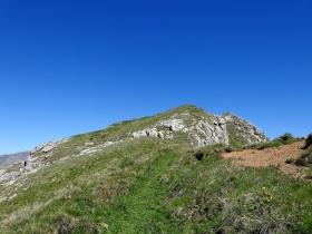 2017-06-11 cima Venegiota e Primula tyrolensis (141)