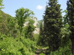 2018-05-06 Cordespino_ Castel Presina (35)