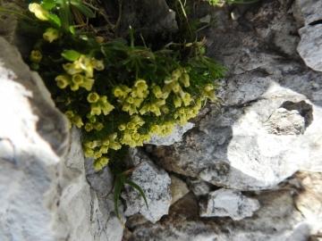 2017-07-23 Sass Pordoi fiori 090