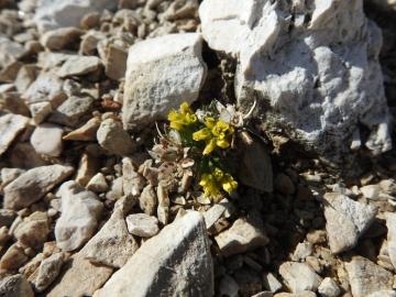 2017-07-23 Sass Pordoi fiori 027