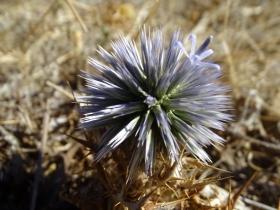 2018-Creta fiori (34)
