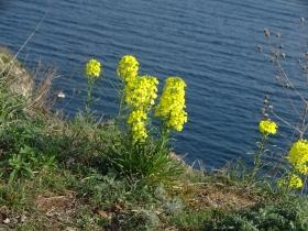 2017-04-02 fiori a Manerba (34)