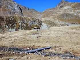 2017-10-15 val Grosina passo Marghera 022