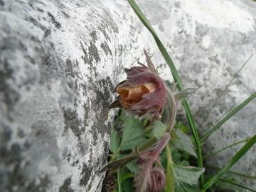 2012-05-27 Monte Misone 025