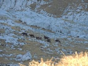 2013-11-13 valle scura Vigna Vaga 015