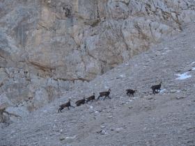 2013-11-13 valle scura Vigna Vaga 017