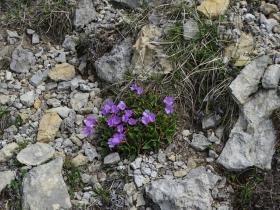 2019-06-08 m.te Grotta Rossa (70)