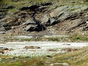 2017-08-04 valle di Peder (46)