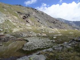 2017-08-04 valle di Peder (66)