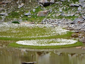 2018-08-05 lago Caione (32)