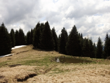 2019-05-26 malga Serolo e Rive 035