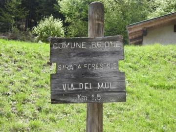 2019-05-26 malga Serolo e Rive 037