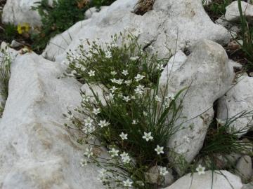 2014-06-14 cima Valdritta Baldo 043