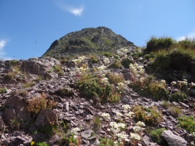 2018-07-28 monte Cauriol (64)