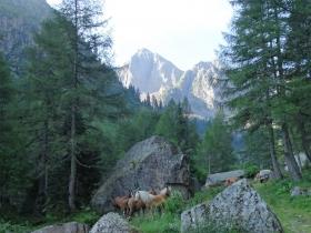 2018-07-28 monte Cauriol (13)