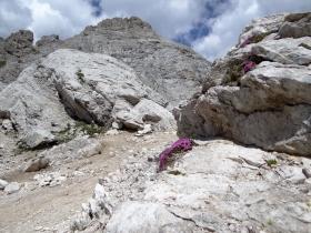 2017-07-08 monte Mulaz da Venegia (177)
