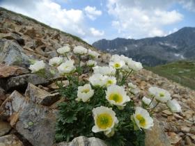 2017-06-21 monte Remà valle Aperta (43)