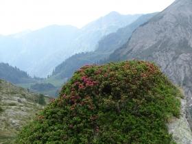 2017-06-21 monte Remà valle Aperta (53)