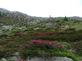 2017-06-21 monte Remà valle Aperta (58)
