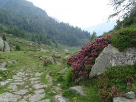 2017-06-21 monte Remà valle Aperta (60)