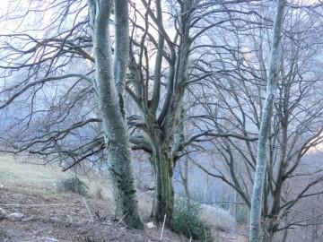 2020-01-12-monte-Vignola-12