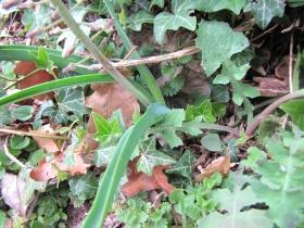 2009-04-19 corno nero vesio 203