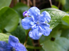 2010-04-17 ValVertova 003