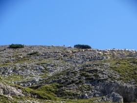 2018-09-09 cima Palon Roite (33)