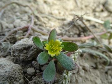 2021-09-08-fiori-Scerne-di-Pineto-25