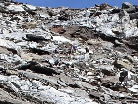 2017-08-03 Punta di Lasa Orgelspitze (51)
