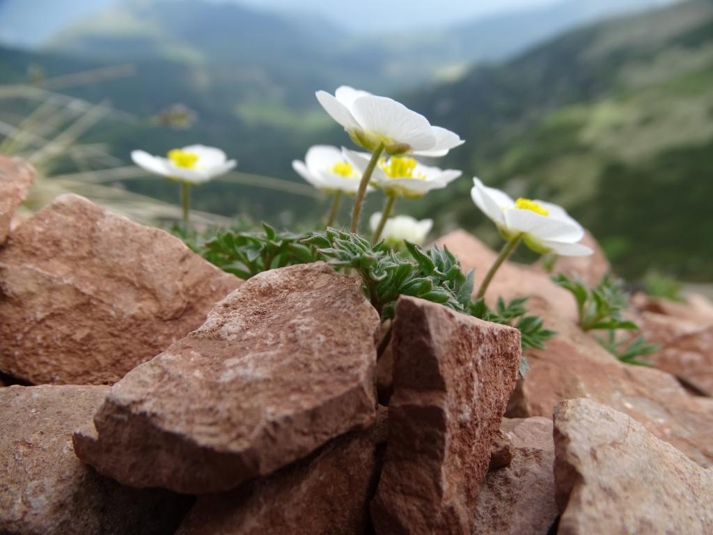 2017-06-02 Bondone tre cime (191)