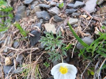 2012-06-09 Crocedomini helvetica 056