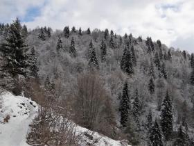 2018-02-04 Rif. Parafulmine da Barzizza di Gandino (163)