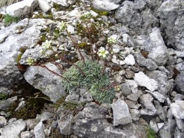 2017-07-08 monte Mulaz da Valvenegia 054