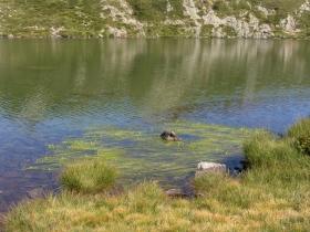 cima dossoni  laghi seroti 06-08-07 071