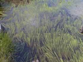 cima dossoni  laghi seroti 06-08-07 073