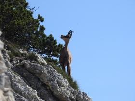 2018-07-18 cima Valdritta 003