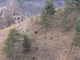 2010-01-3_4 cima Tignalga 014
