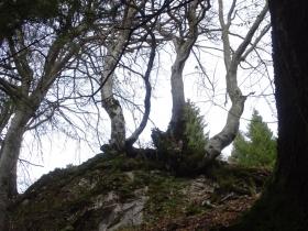 2016-11-20 monte Stigolo (34)