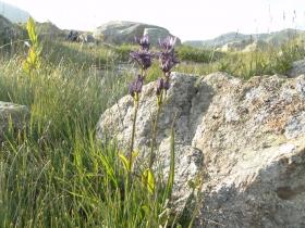 2012-07-20 Ravenola e Campovecchio 004