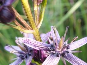 2012-07-20 silter campolungo colombine 022 - Copia (2)