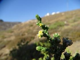 2018-Creta fiori (40)